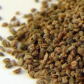 Celery Seed - Apium graveolens