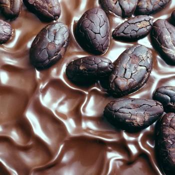 Cocao - Theobroma cacao