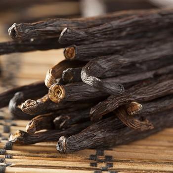 Vanilla - Vanilla planifolia