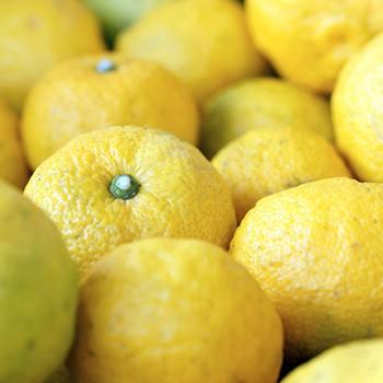 yuzu distilled essential oilyuzu citrus junos